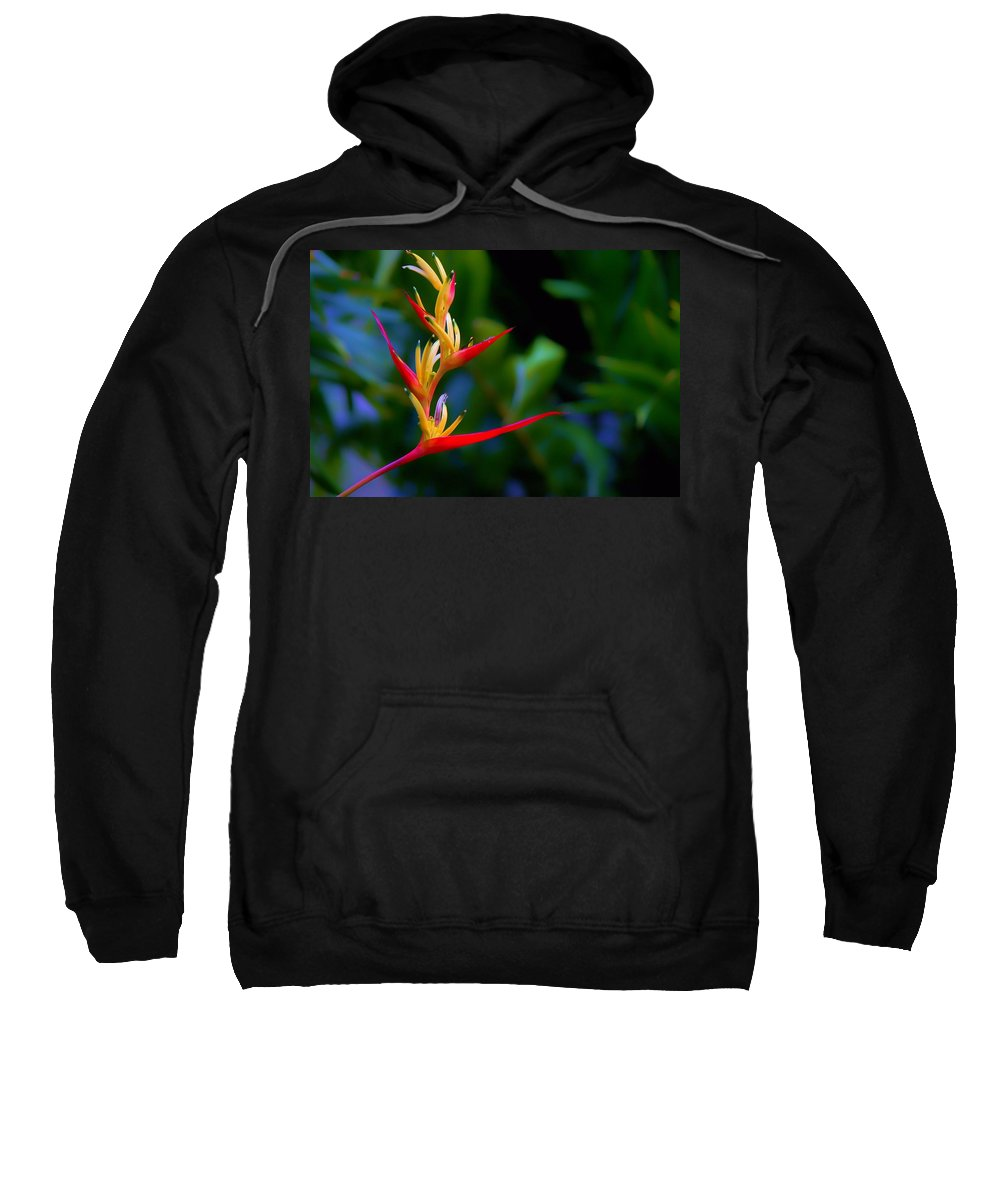 Carol R Montoya Sweatshirt featuring the photograph Heliconia -parrot's Beak I by Carol Montoya