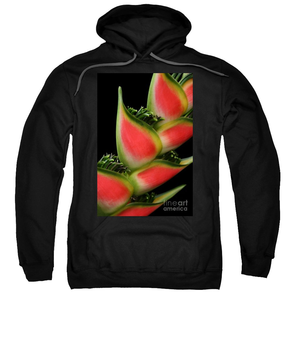 Rainbow Heliconia Sweatshirt featuring the photograph Heliconia Wagneriana - Giant Lobster Claw Heliconiaceae - Maui Hawaii by Sharon Mau