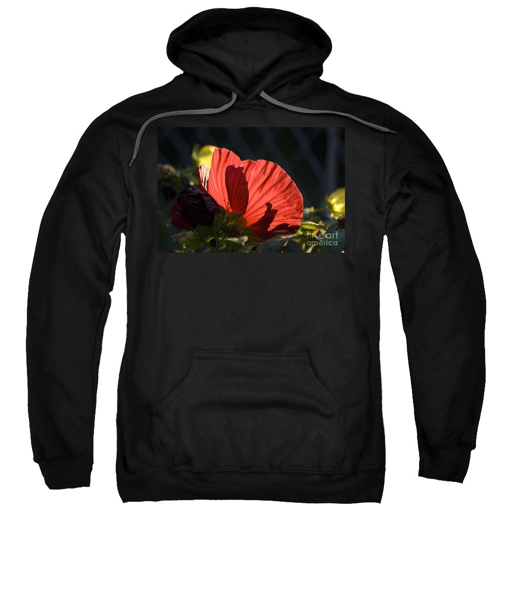 Hibiscus Sweatshirt featuring the photograph Hibiscus 10 by Thomas Woolworth