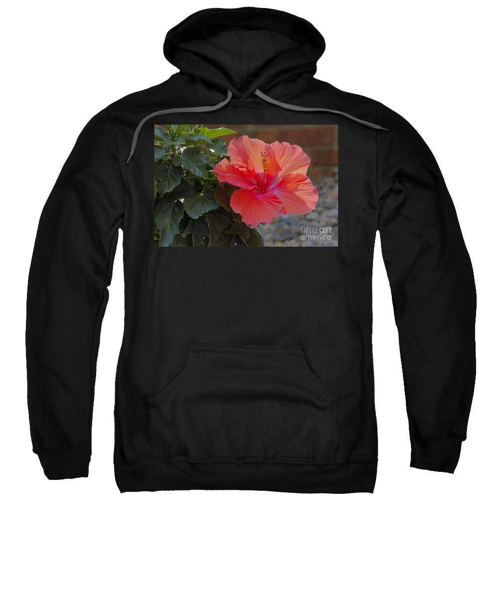 Environment Sweatshirt featuring the photograph Hibiscus 2 by Alan Look