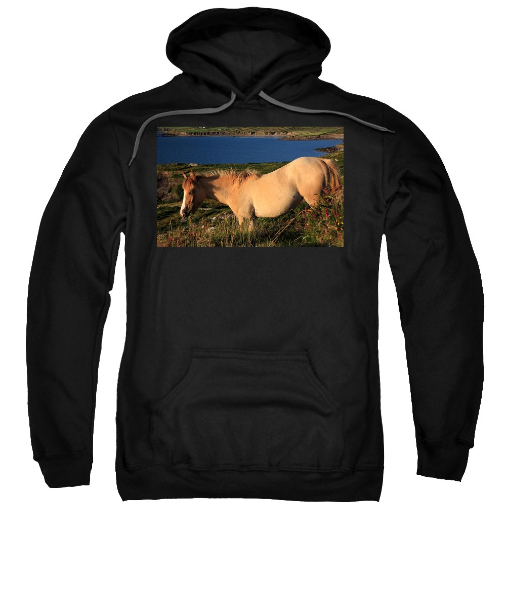 Horse Sweatshirt featuring the photograph Horse In Wildflower Landscape by Aidan Moran