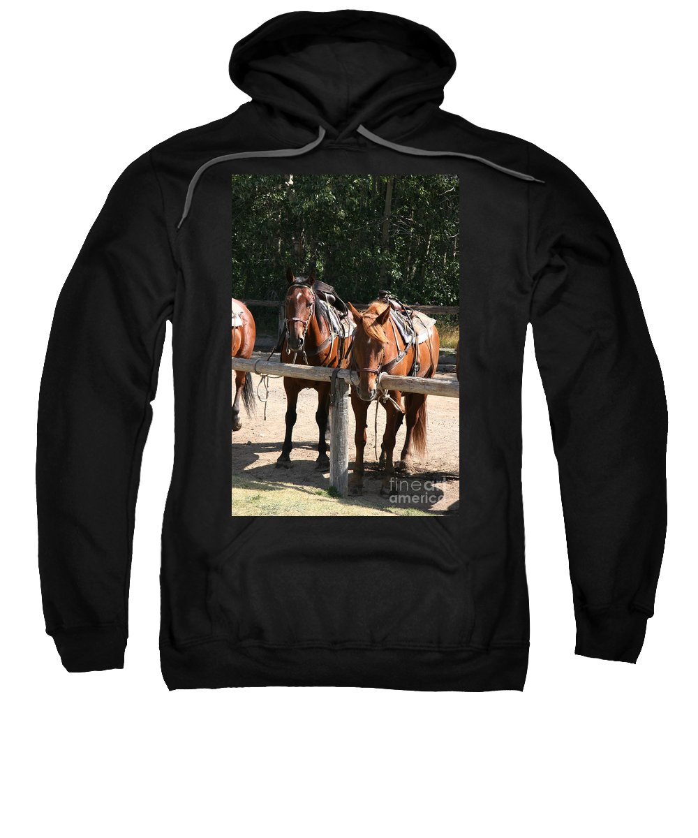 Glacier National Park Sweatshirt featuring the photograph Horses Glacier National Park Montana by Jason O Watson