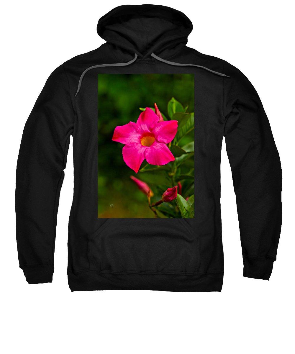 Dipladenia Sweatshirt featuring the photograph Hot Pink Dipladenia by Karol Livote
