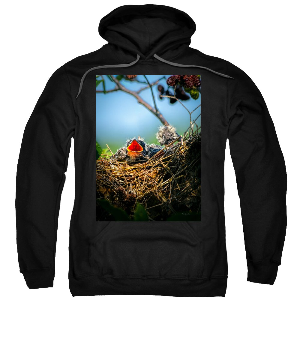 Swallows Sweatshirt featuring the photograph Hungry Tree Swallow Fledgling In Nest by Bob Orsillo