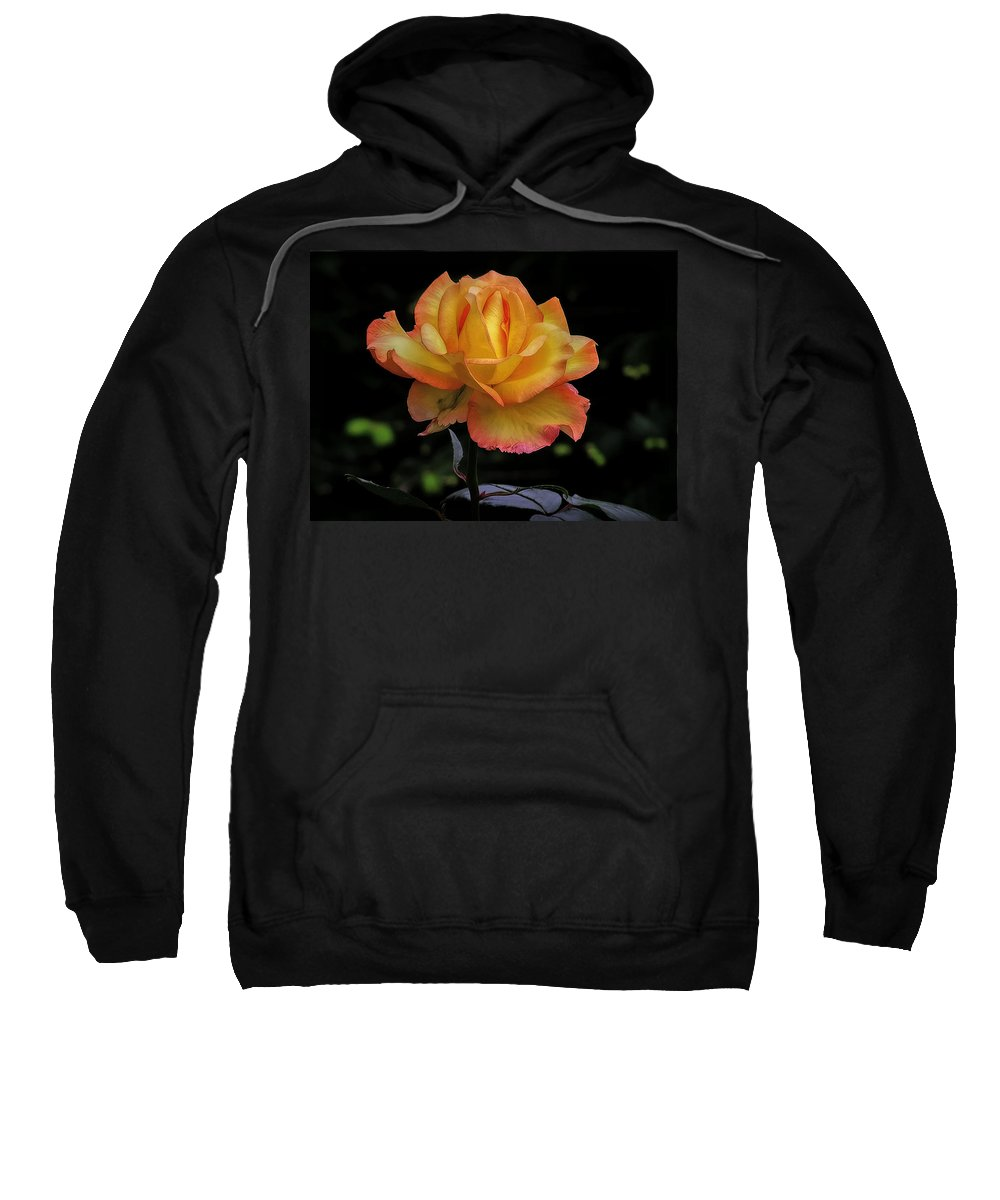Rose Sweatshirt featuring the photograph I Know I'm Beautiful by Hanny Heim