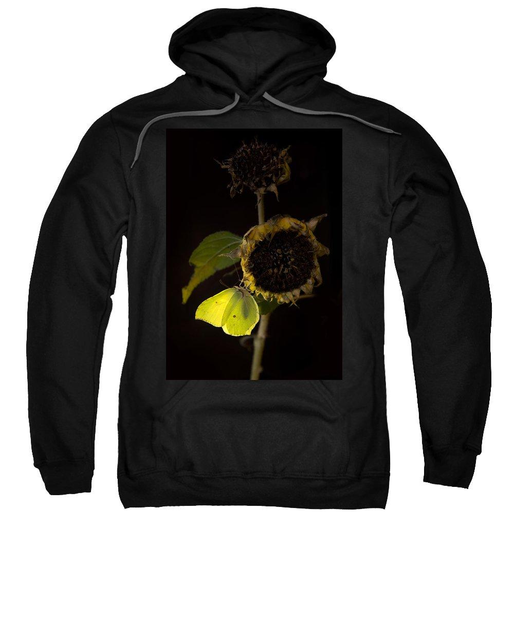 Sunflower Sweatshirt featuring the photograph Impression At Night by Jaroslaw Blaminsky