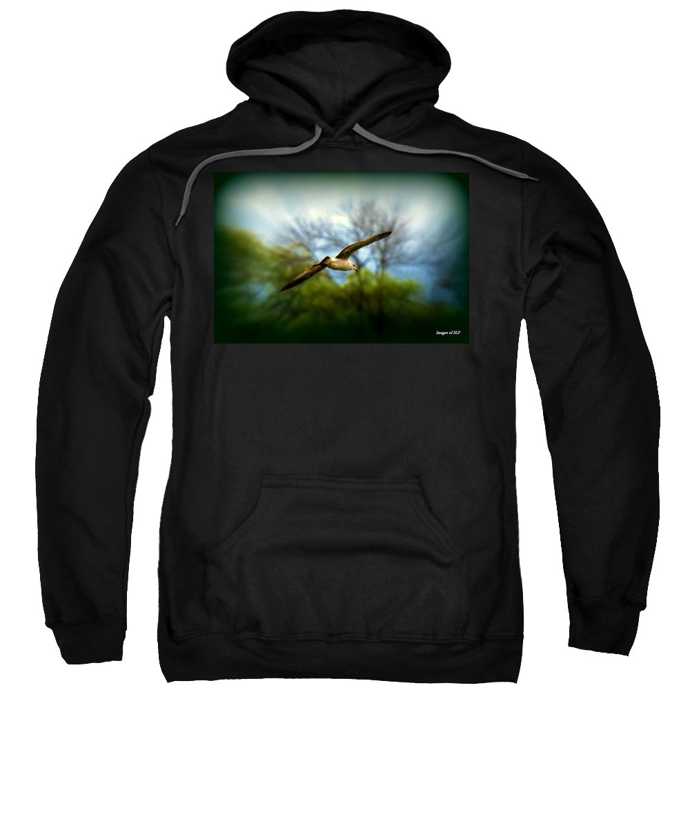 Sea Gall Sweatshirt featuring the photograph In Flight by Scott Polley
