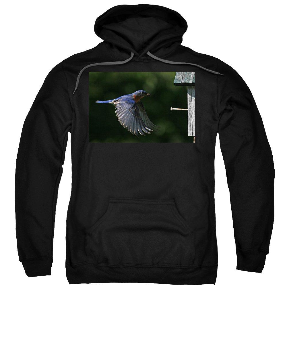 Bluebird Sweatshirt featuring the photograph Incoming by Douglas Stucky