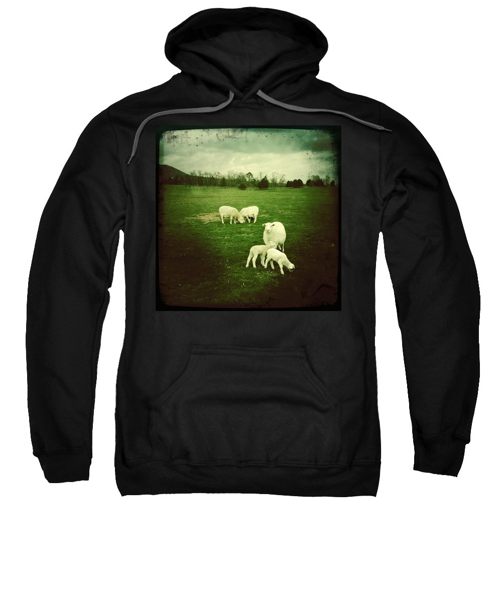 Lamb Sweatshirt featuring the photograph Innocence by Dorian Hill