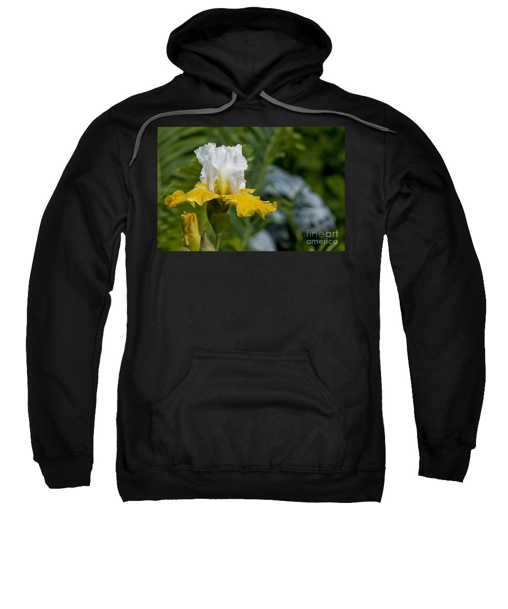 Iris Sweatshirt featuring the photograph Iris Pictures 169 by World Wildlife Photography