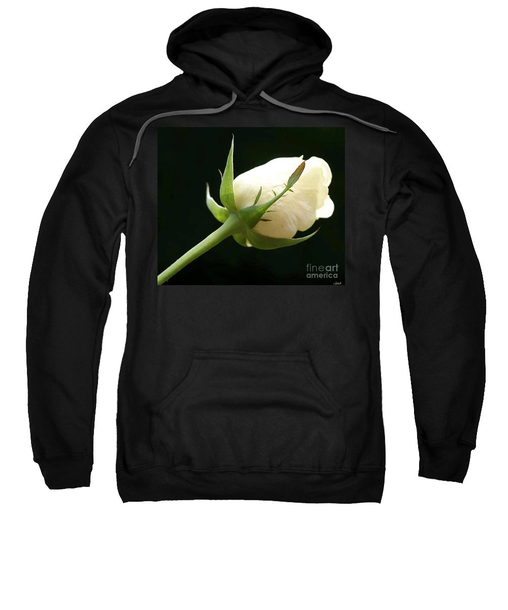 Ivory Sweatshirt featuring the photograph Ivory Rose Bud by Carol Lynch