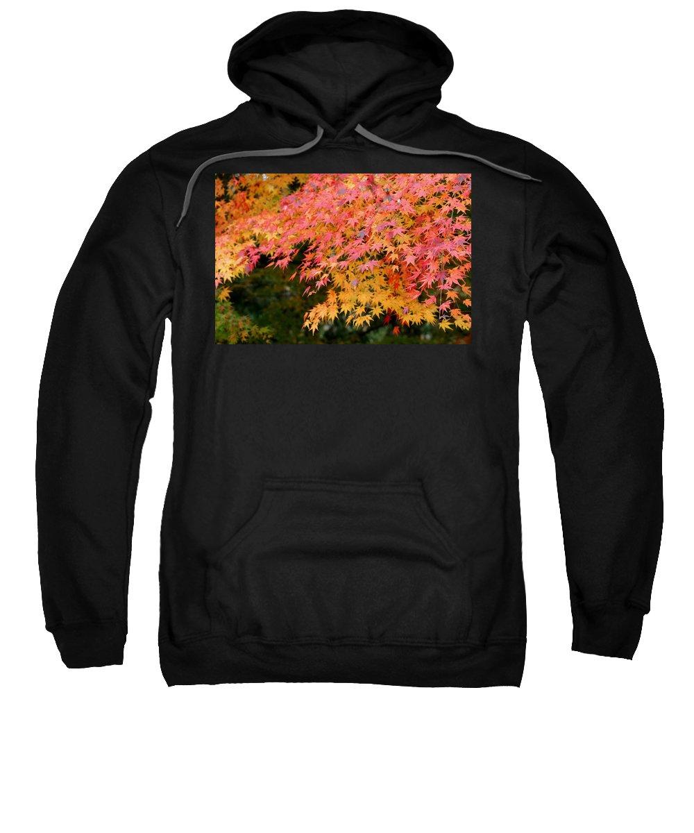 Japanese Maple Sweatshirt featuring the photograph Japanese Maple by Living Color Photography Lorraine Lynch