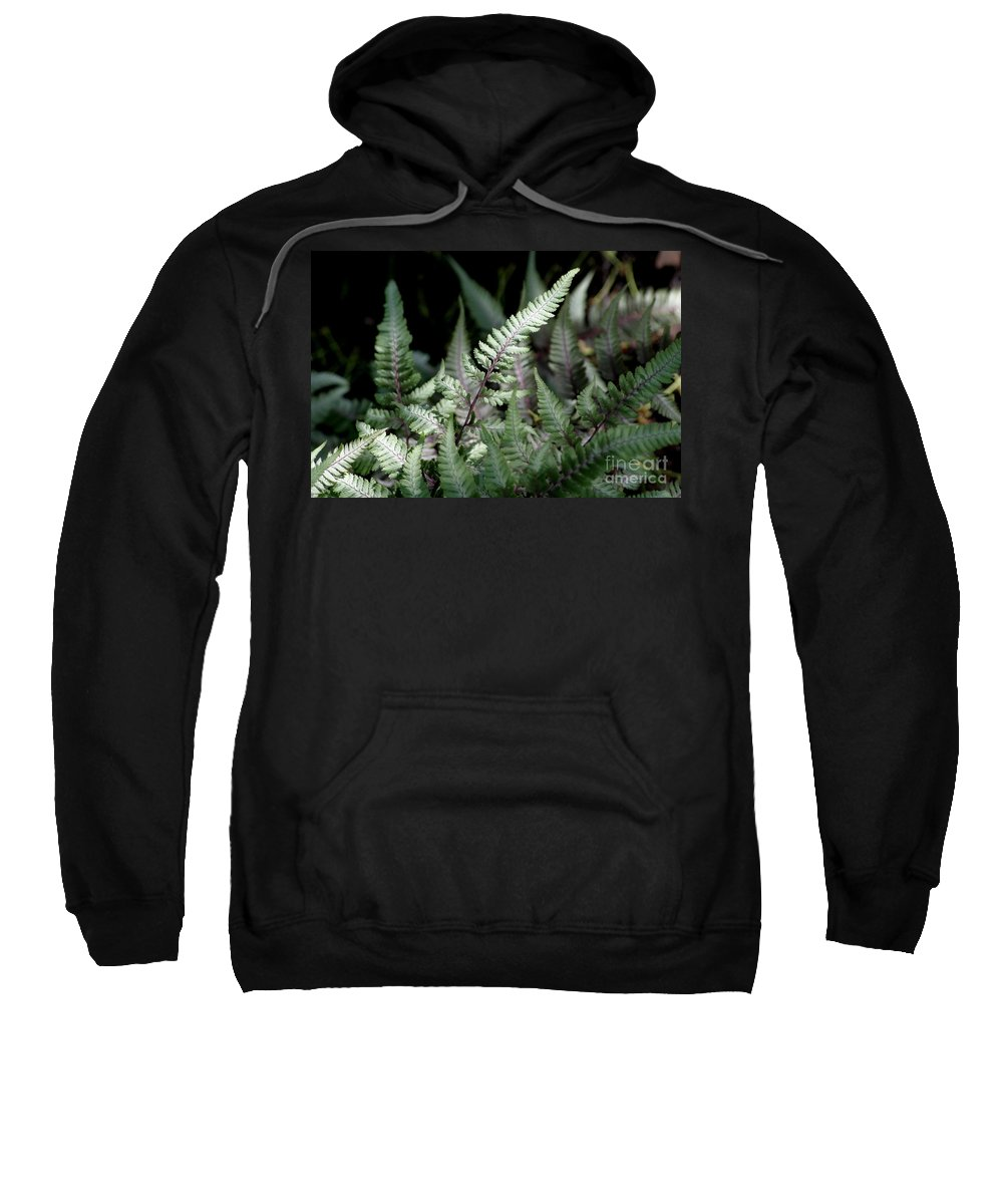 Japanese Painted Fern Sweatshirt featuring the photograph Japanese Painted Fern by Living Color Photography Lorraine Lynch