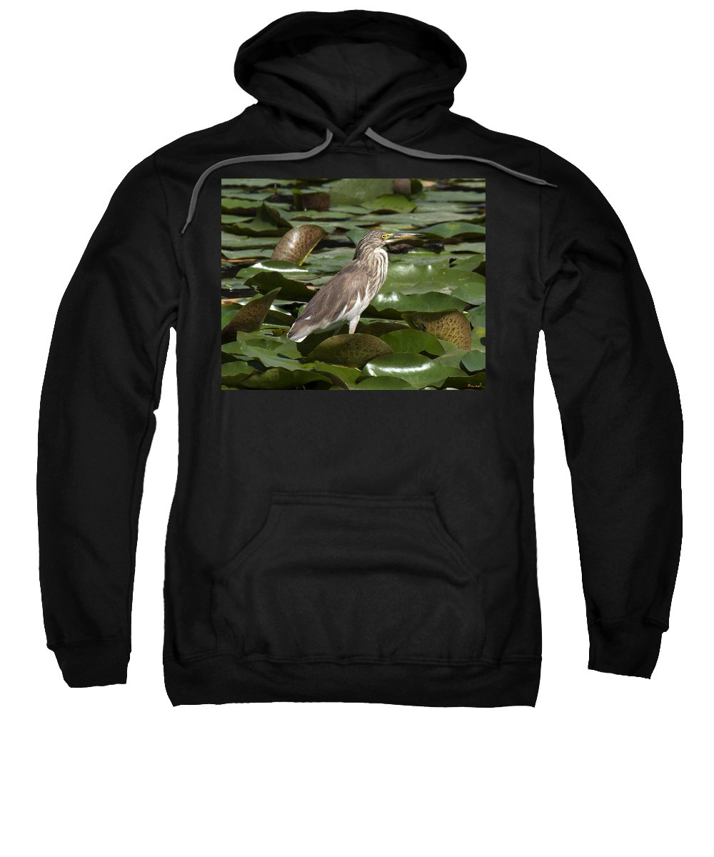 Nature Sweatshirt featuring the photograph Javan Pond Heron Dthn0071 by Gerry Gantt