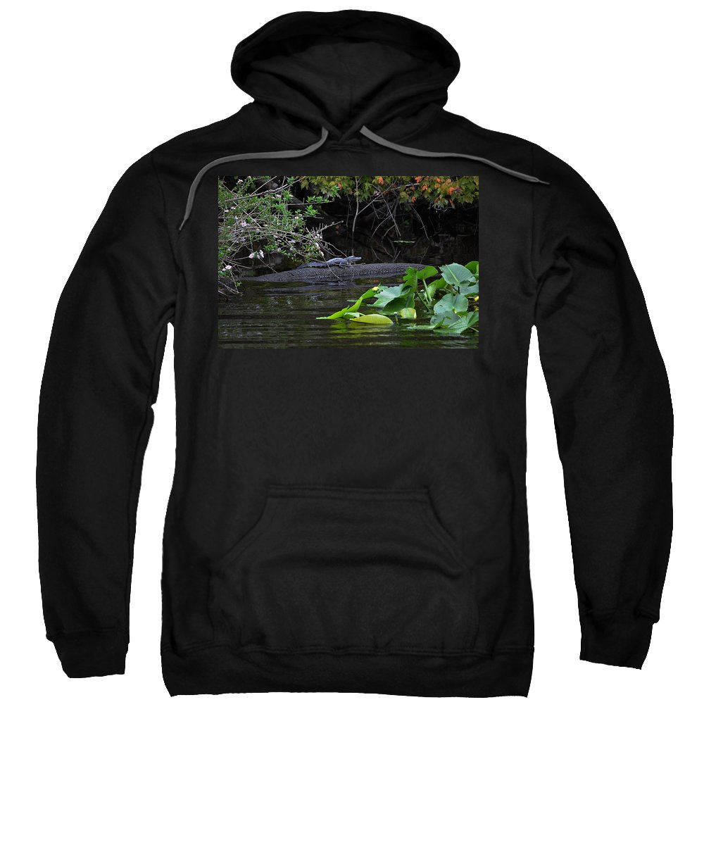 Alligator Sweatshirt featuring the photograph Juvie Gator by DigiArt Diaries by Vicky B Fuller