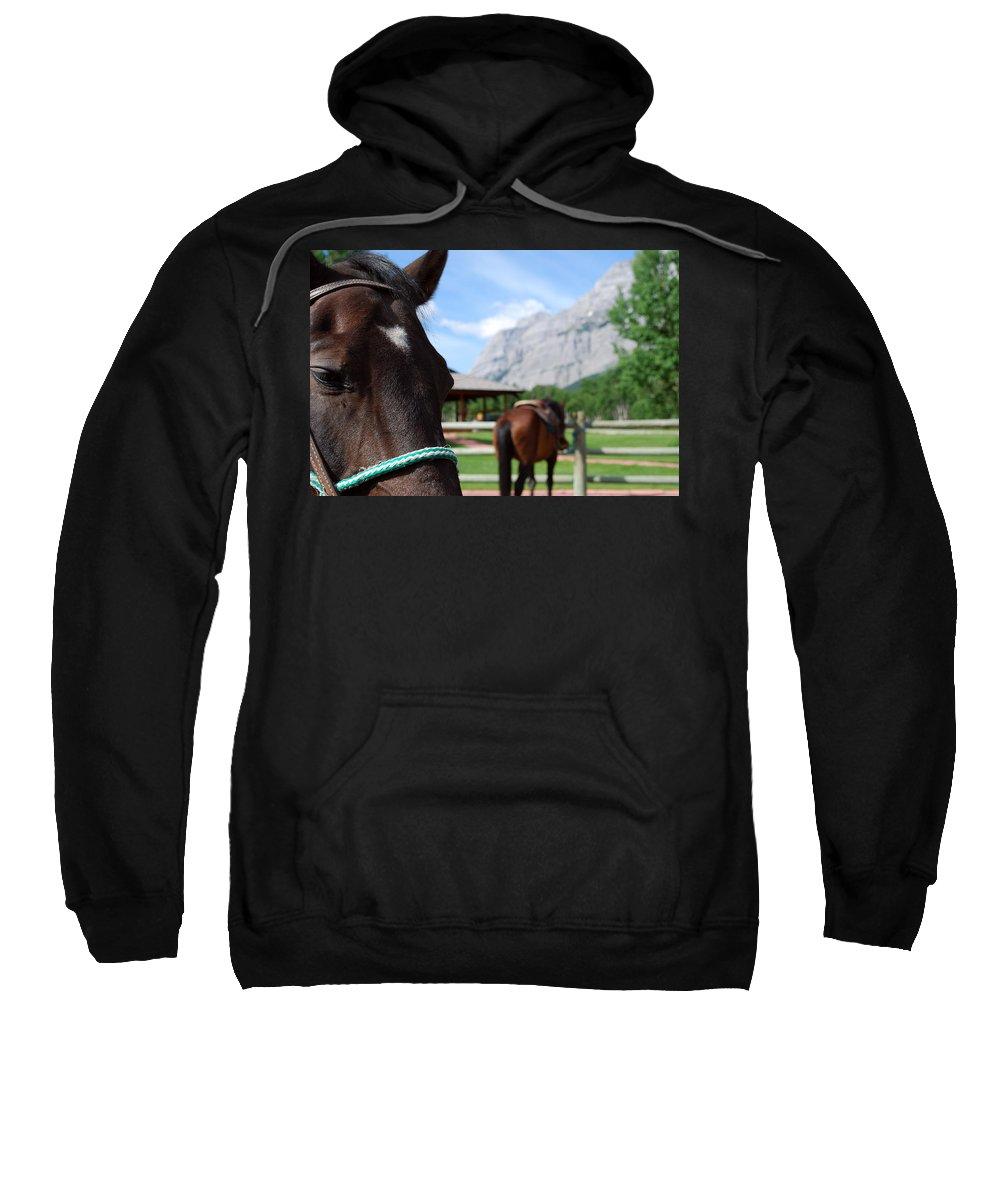 Kananaskis Sweatshirt featuring the photograph K Country by Lisa Knechtel