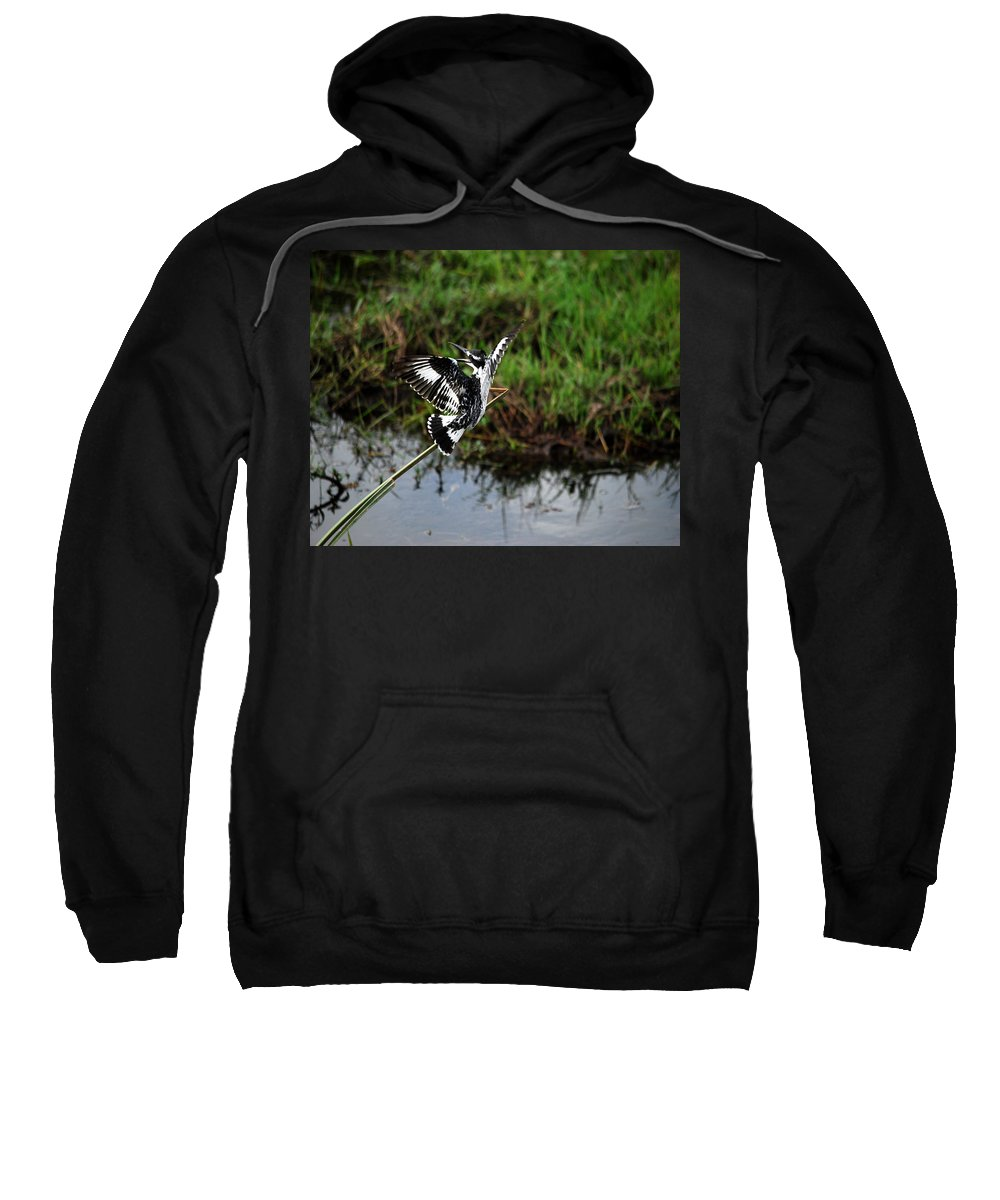 Flight Sweatshirt featuring the photograph Kingfisher by Pamela Peters
