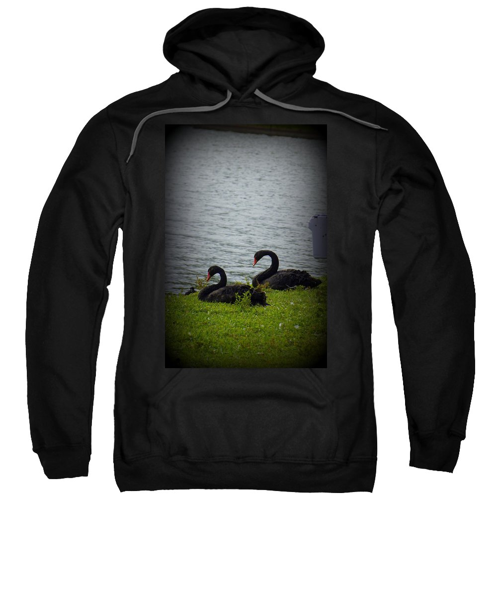 Swan Sweatshirt featuring the photograph Lakeland Treasures by Laurie Perry