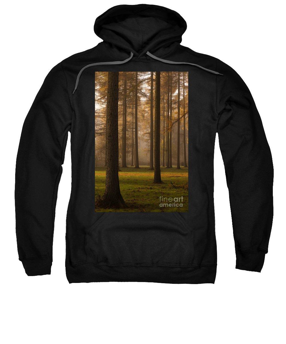 Arboreta Sweatshirt featuring the photograph Larch Grove by Anne Gilbert