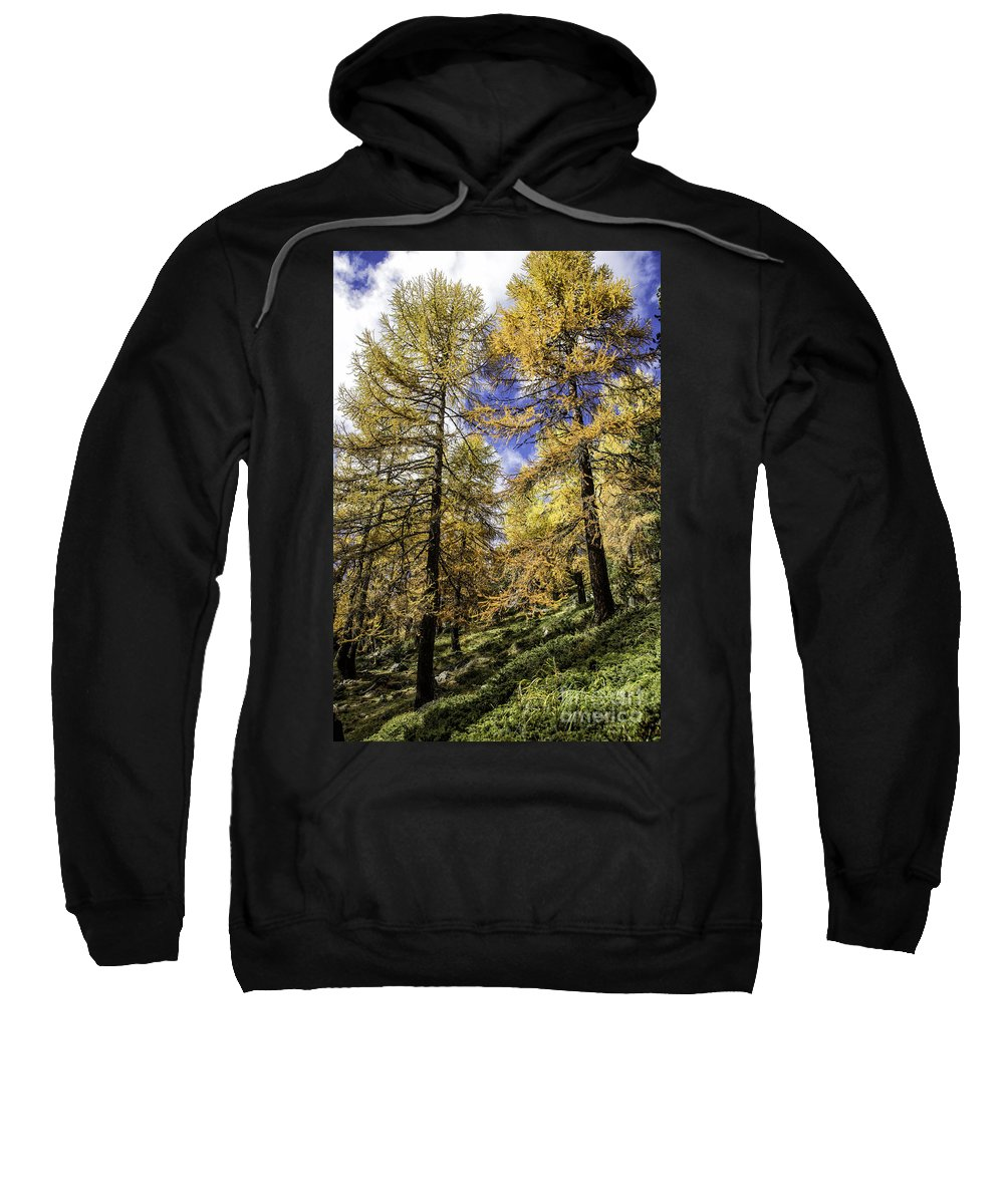 Pontresina Sweatshirt featuring the photograph Larch Pines by Timothy Hacker