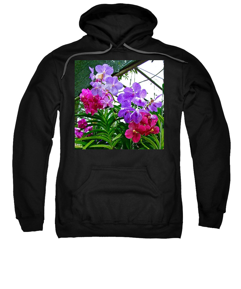 Lavender And Red Orchids At Maerim Orchid Farm In Chiang Mai Sweatshirt featuring the photograph Lavender And Red Orchids At Maerim Orchid Farm In Chiang Mai-tha by Ruth Hager