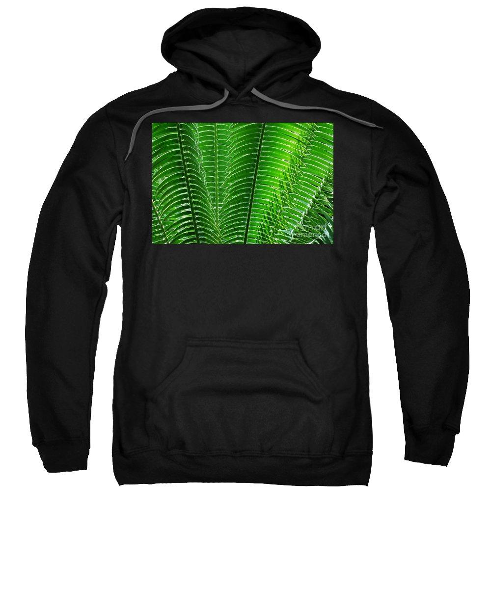 Ferns Sweatshirt featuring the photograph Layered Ferns I by Nancy Mueller