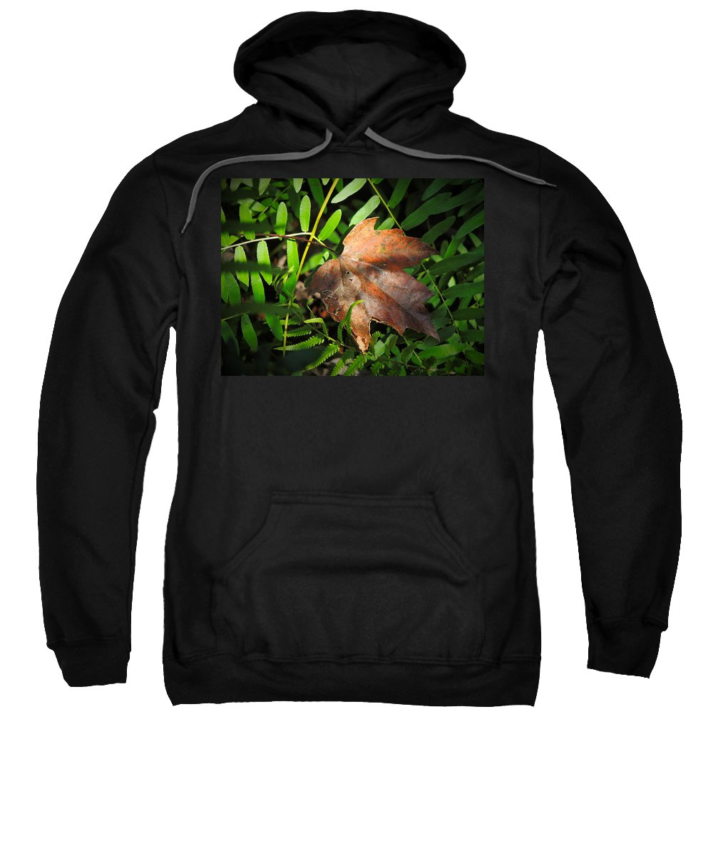 Phil Sweatshirt featuring the photograph Leaf Among Ferns by Phil Penne