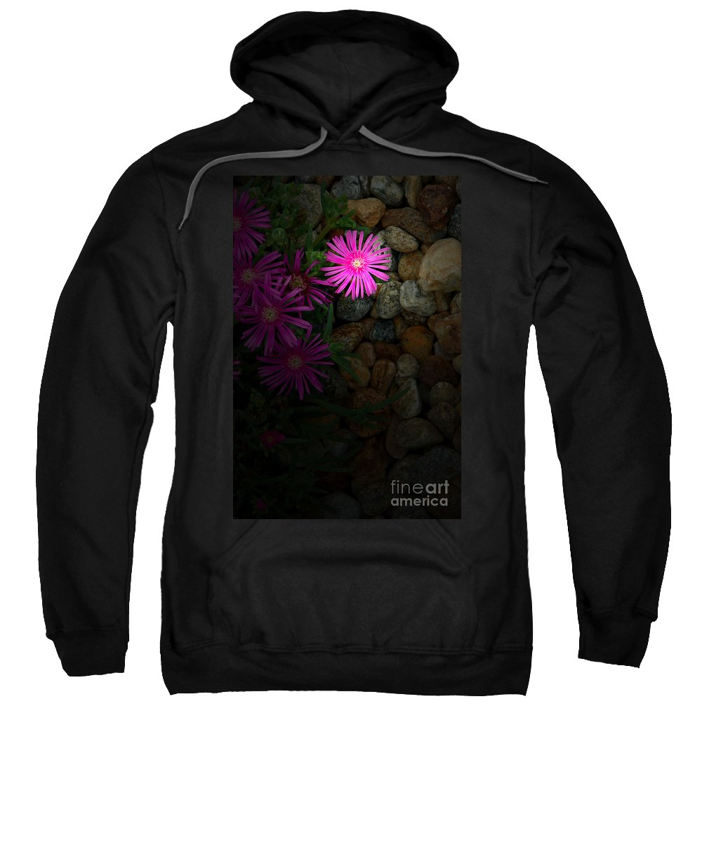 Ice Plant Sweatshirt featuring the photograph Light In The Rock Garden by Mike Nellums