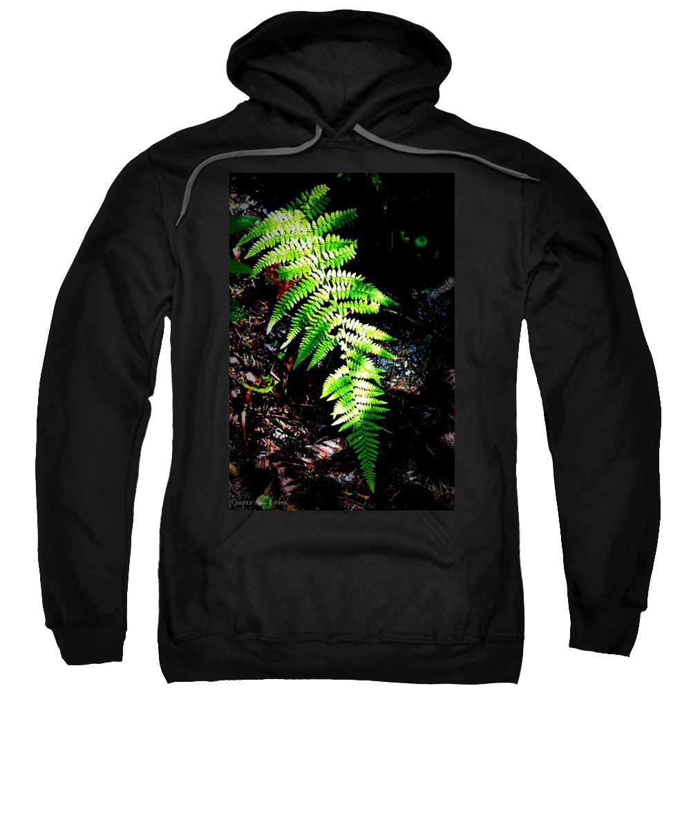 Fern Sweatshirt featuring the photograph Light Play On Fern by Tara Potts
