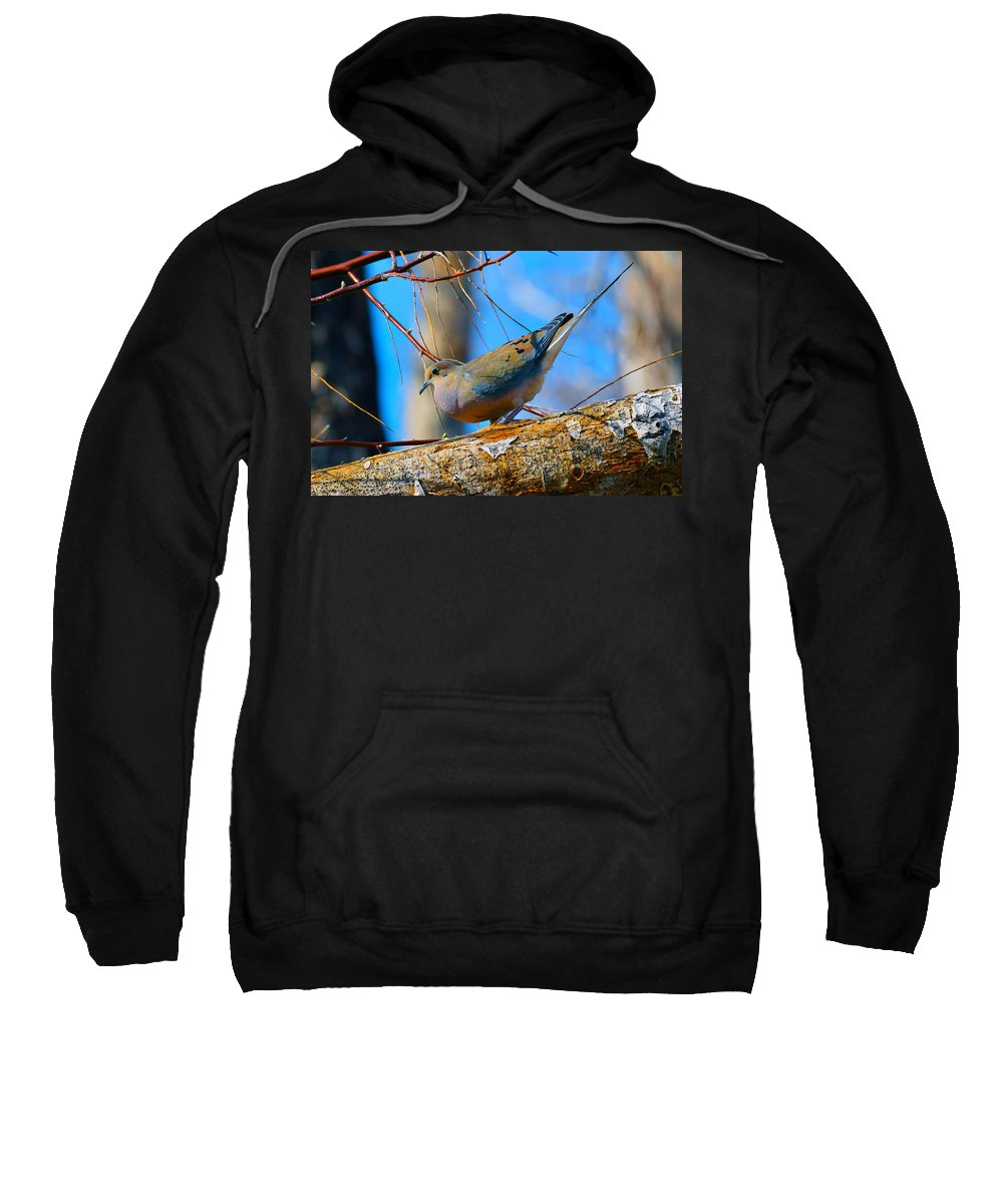 Bird Sweatshirt featuring the photograph Little Birdie by Brent Dolliver