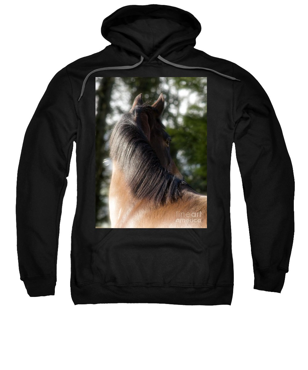 Horse Sweatshirt featuring the photograph Looking Back by Angel Ciesniarska