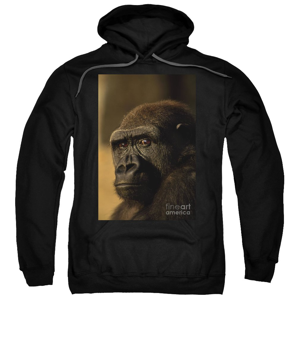 Lowland Gorilla Sweatshirt featuring the photograph Lowland Gorilla by Frans Lanting MINT Images