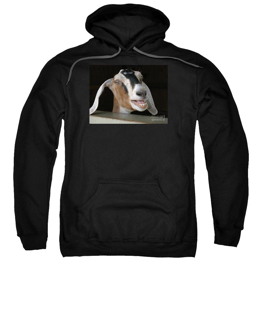 Goat Sweatshirt featuring the photograph Maa-aaa by Ann Horn