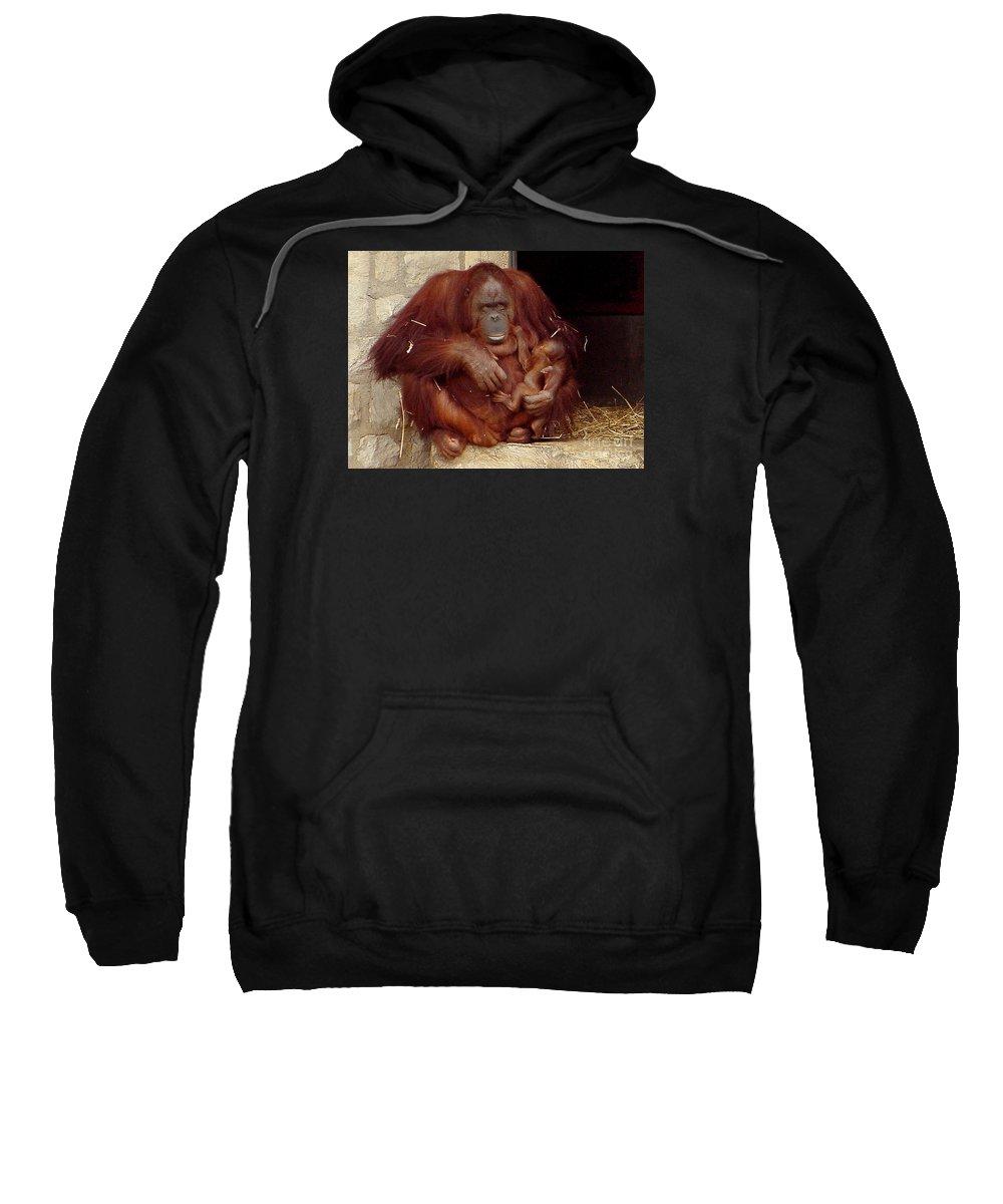 Orangutan Sweatshirt featuring the photograph Mama N Baby Orangutan - 54 by Gary Gingrich Galleries