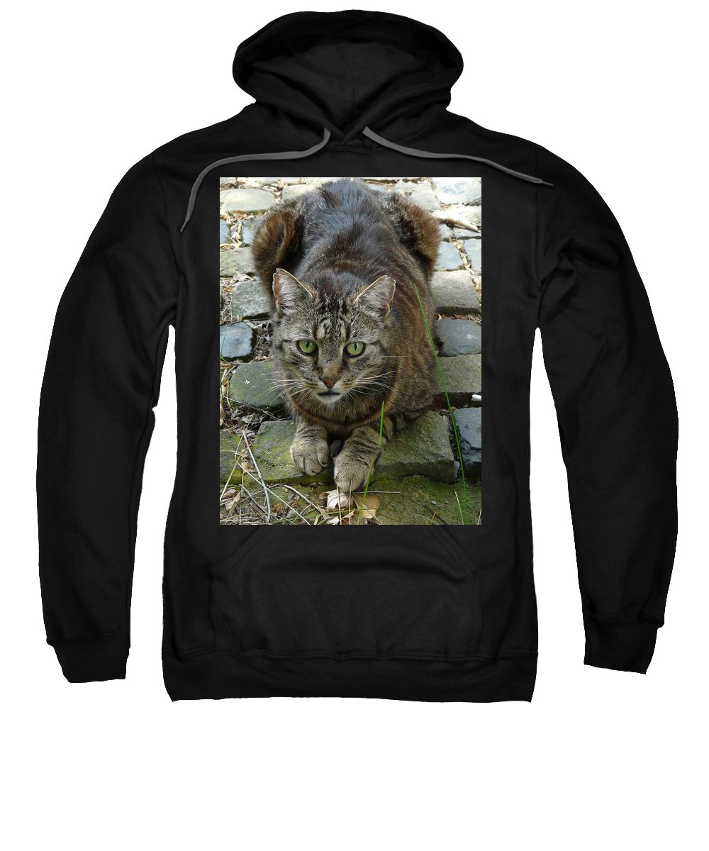 Cat Sweatshirt featuring the photograph Marco by Valerie Ornstein