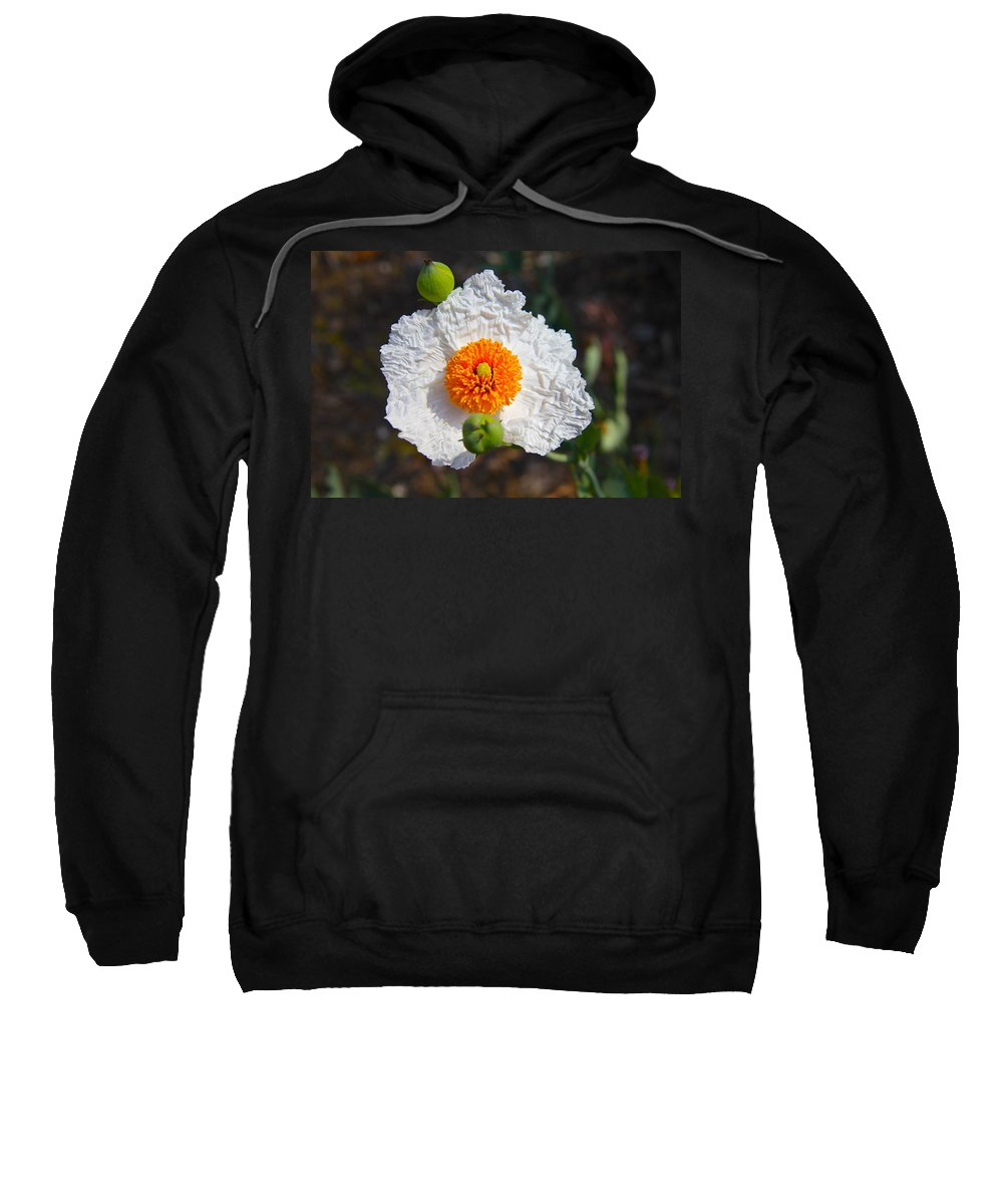 Flower Sweatshirt featuring the photograph Matilija Poppy Buds And Bloom by Denise Mazzocco