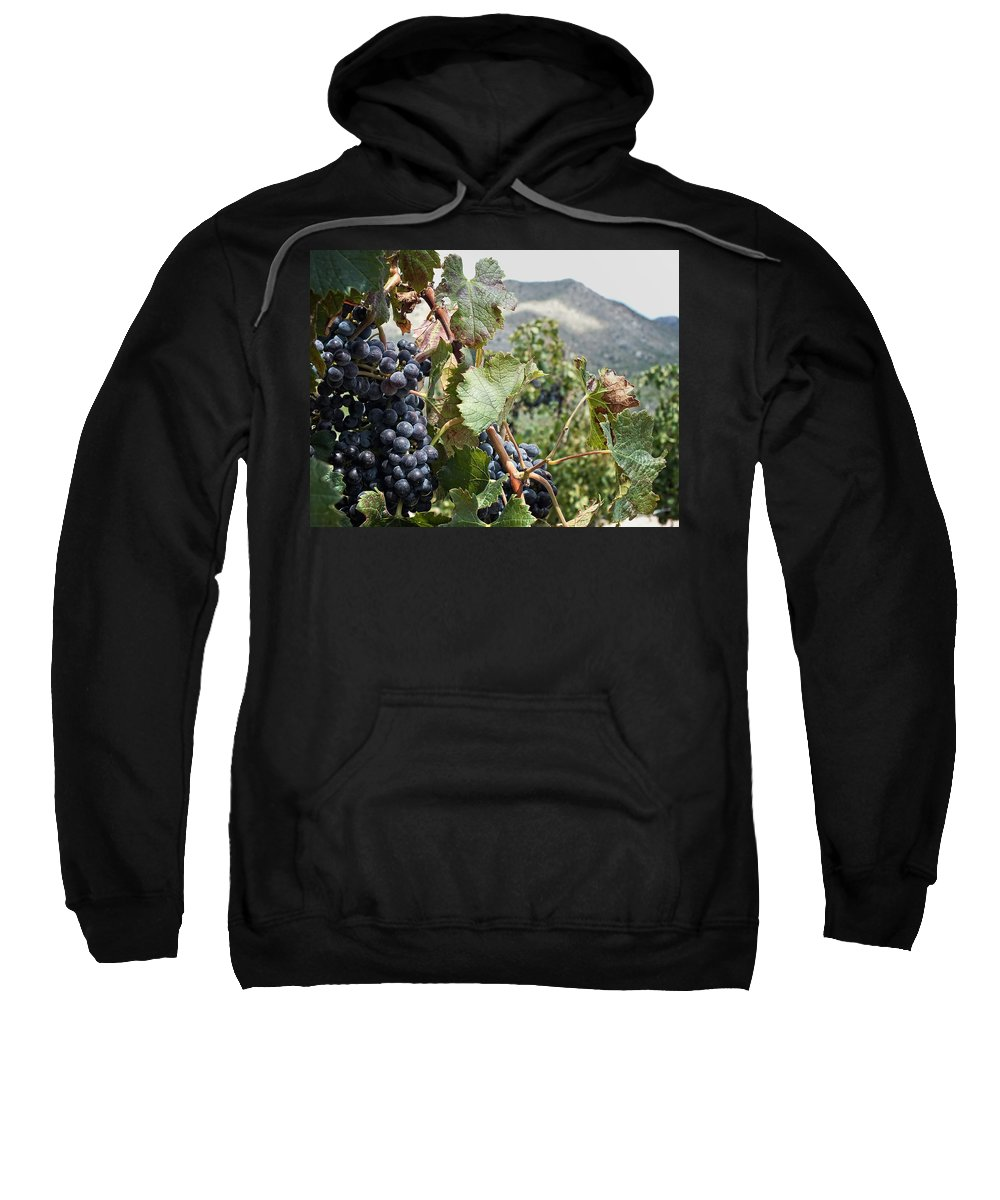 Wine Sweatshirt featuring the photograph Merlot Ready by Lucinda Walter