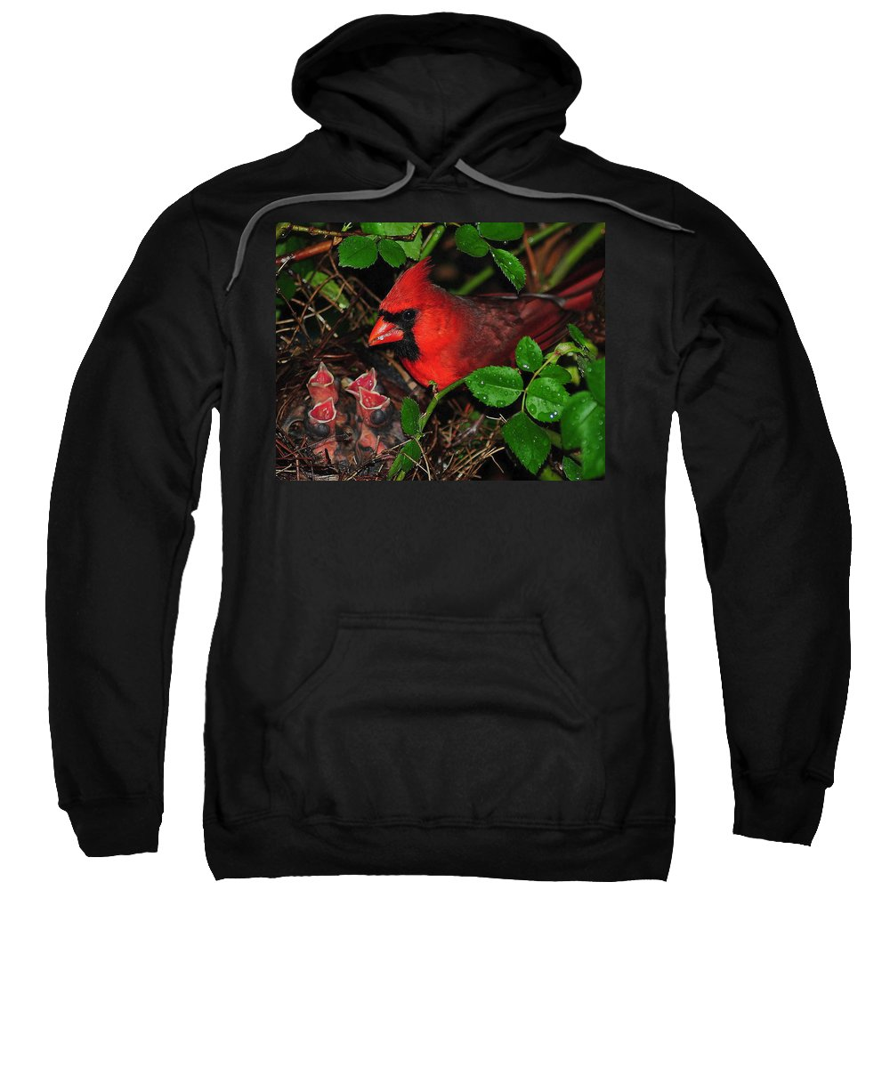 Cardinal Sweatshirt featuring the photograph Midnight Snack Ll by Frozen in Time Fine Art Photography