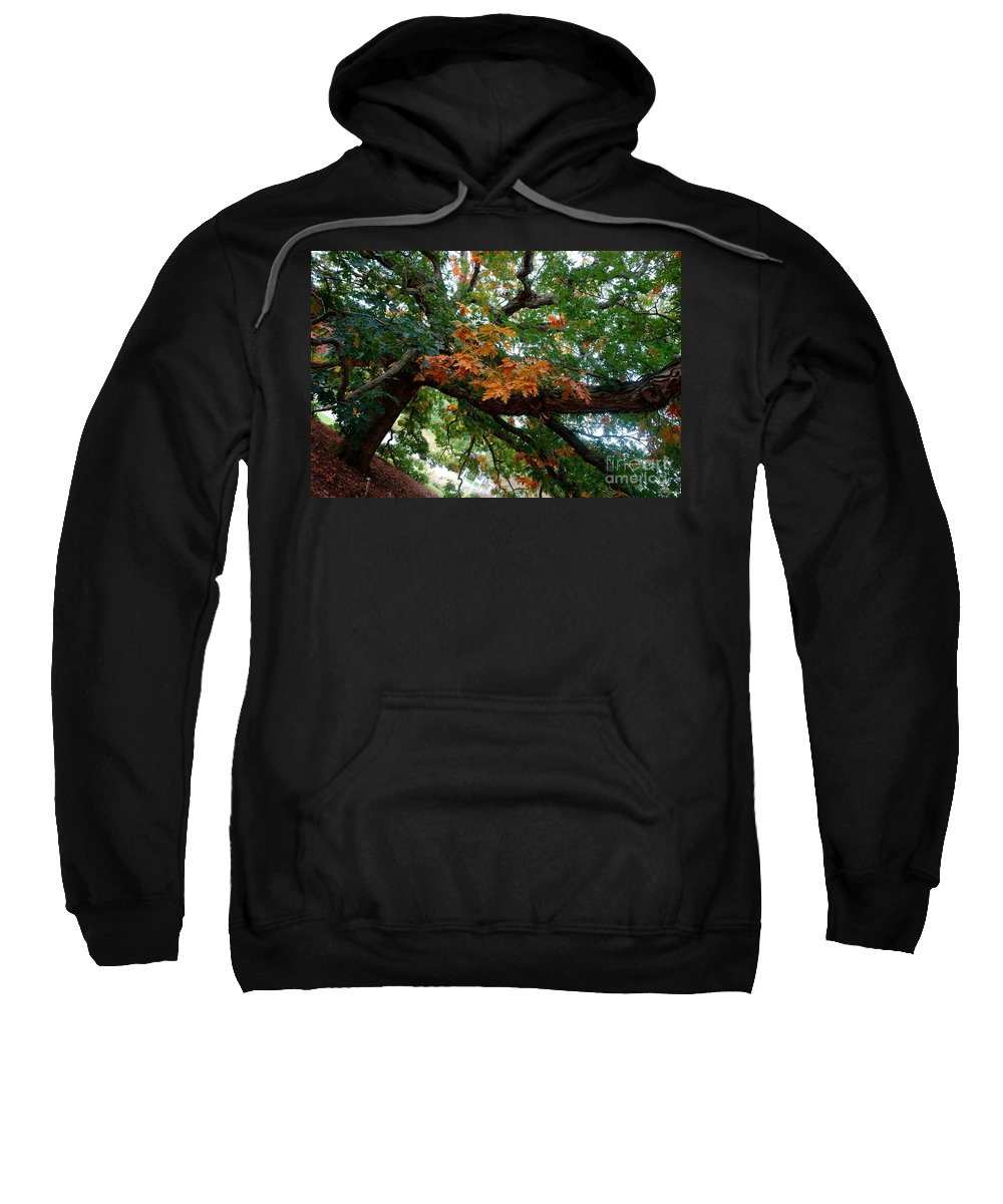Tree Sweatshirt featuring the photograph Mighty Fall Oak #1 by Jacqueline Athmann