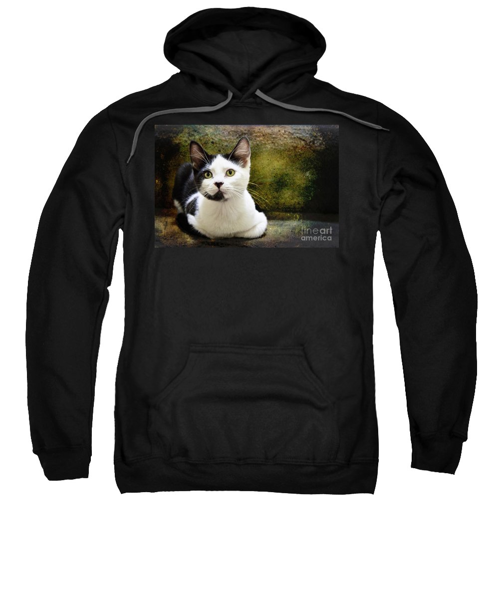 Kittens Sweatshirt featuring the photograph Mika by Ellen Cotton