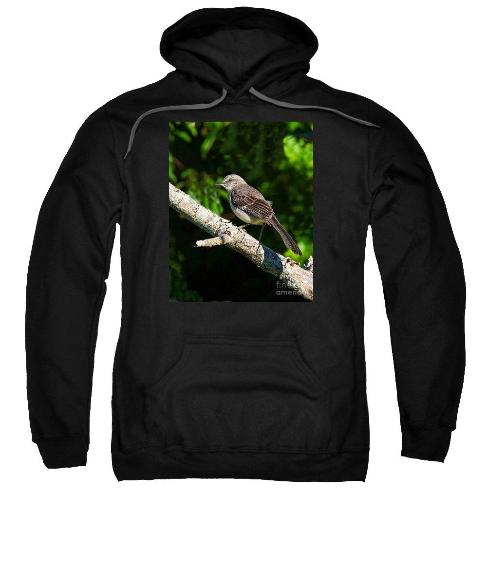 Mockingbird Sweatshirt featuring the photograph Mockingbird by Timothy Flanigan