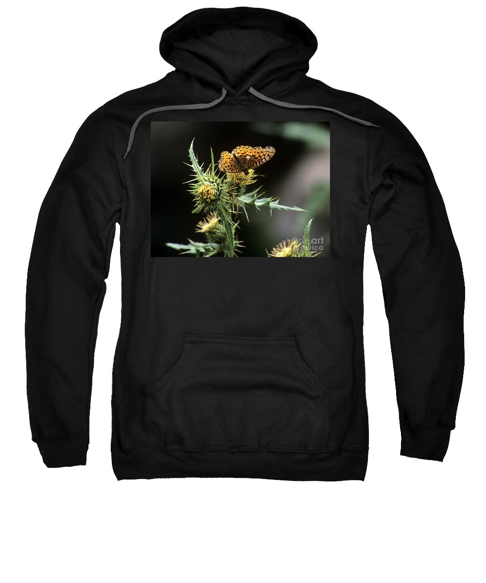 Butterfly Sweatshirt featuring the photograph Monarch On Thistle by Kathy McClure