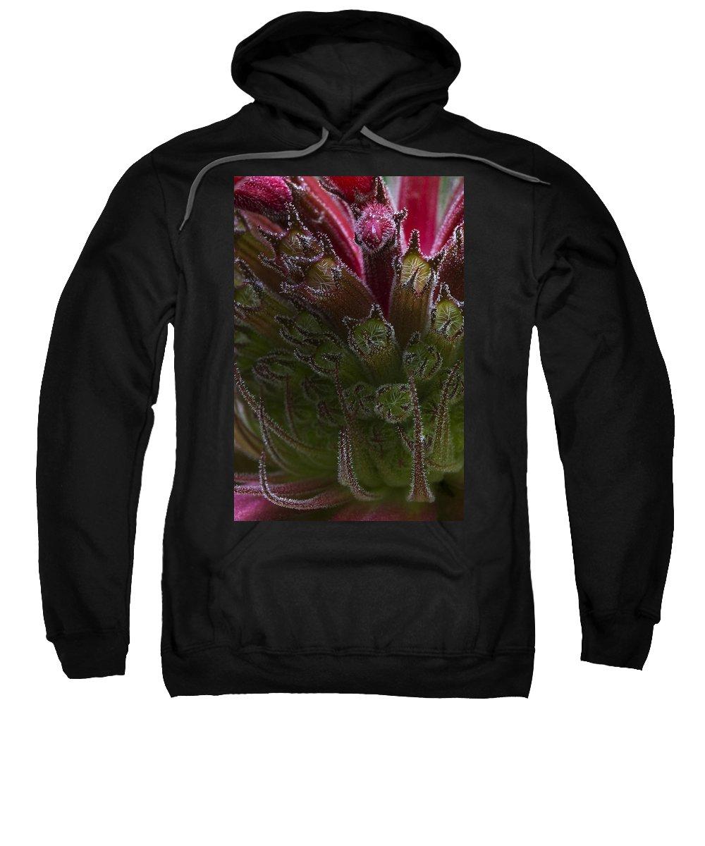 Card Sweatshirt featuring the photograph Monarda by Guy Shultz