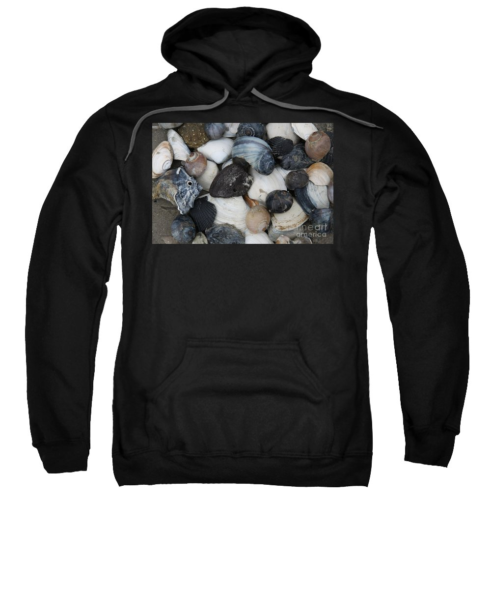 Moon Snails Sweatshirt featuring the photograph Moon Snails And Shells Still Life by Christiane Schulze Art And Photography