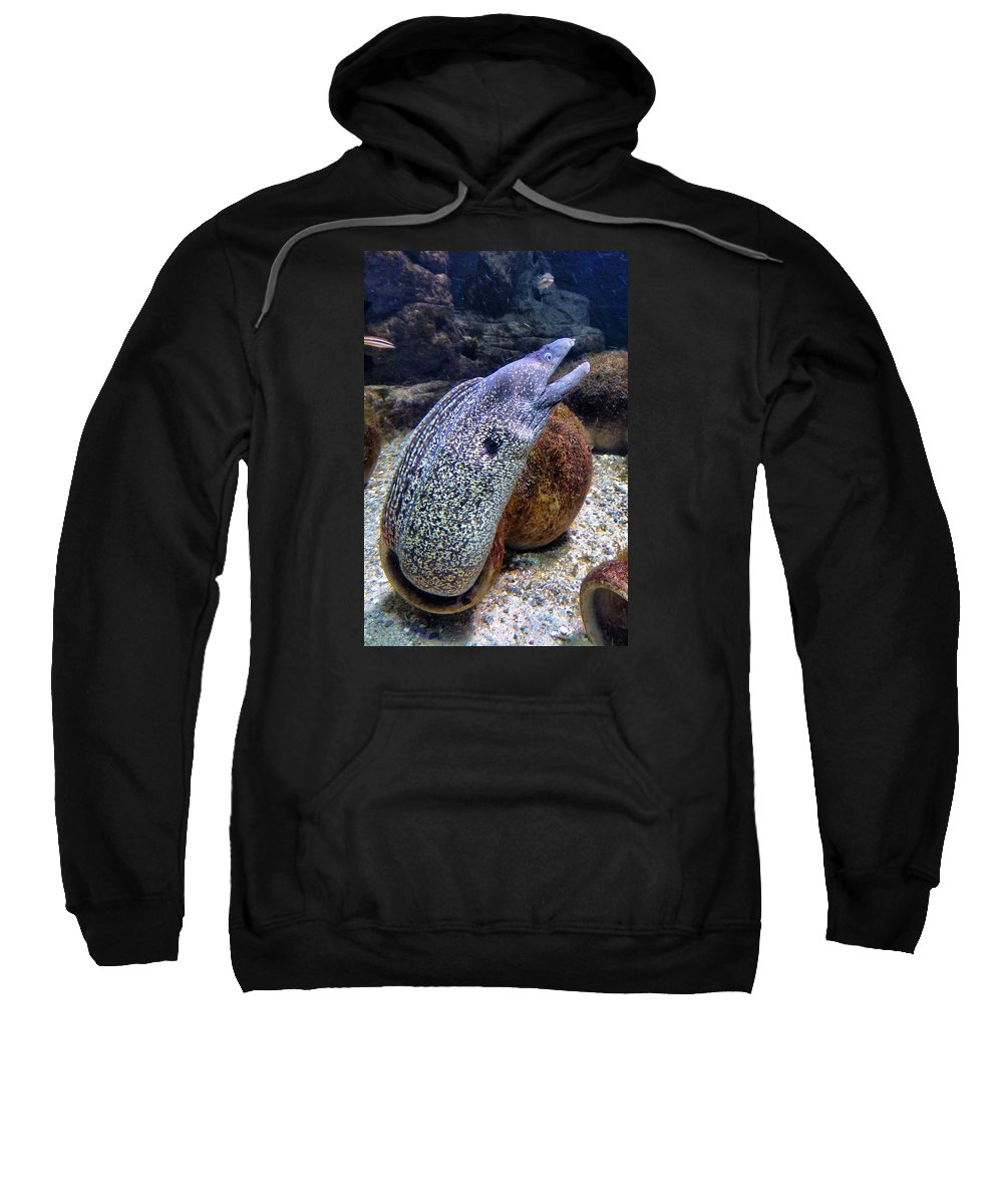 Eel Sweatshirt featuring the photograph Moray Eel by FL collection