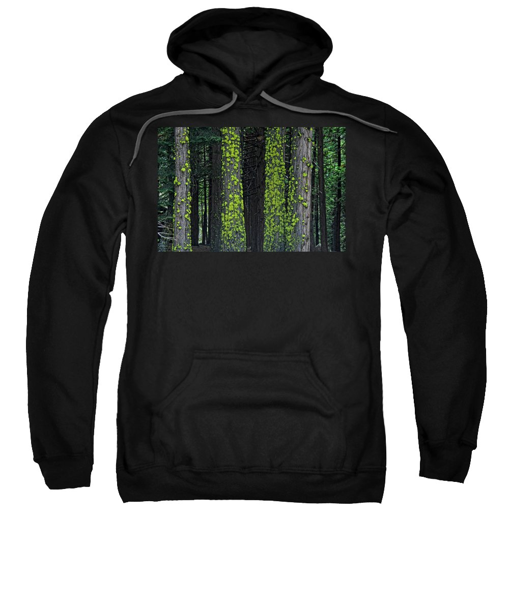 Tree Sweatshirt featuring the photograph Mossy Sentinels by Donna Blackhall