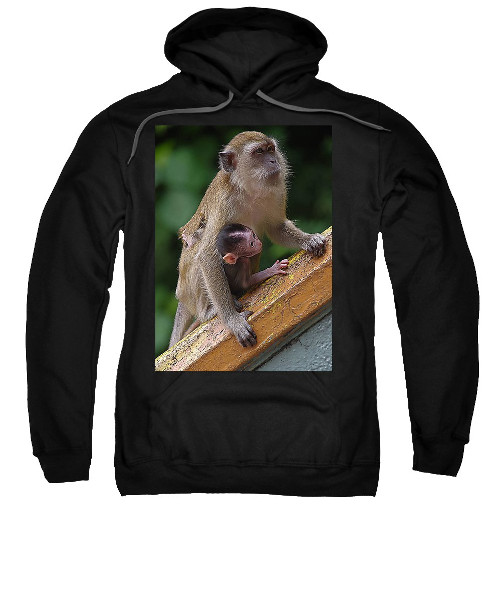 Monkeys Sweatshirt featuring the photograph Mother Monkey And Her Baby by SilkAndPaper Art