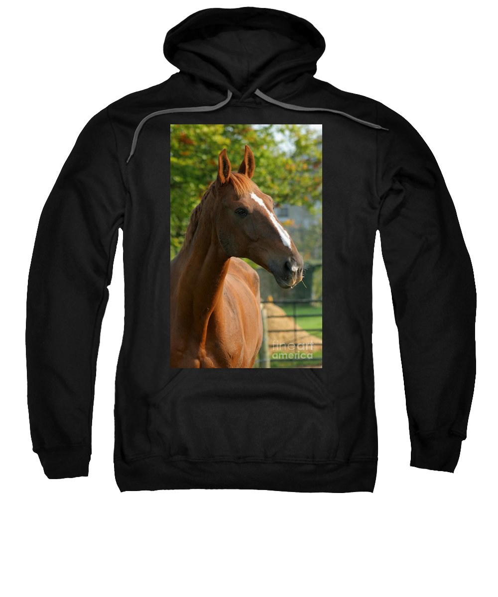 Horse Sweatshirt featuring the photograph Mr Handsome by Angel Ciesniarska