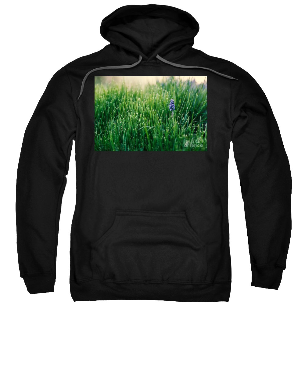 Muscari Sweatshirt featuring the photograph Muscari Or Grape Hyacinth by Mary Smyth