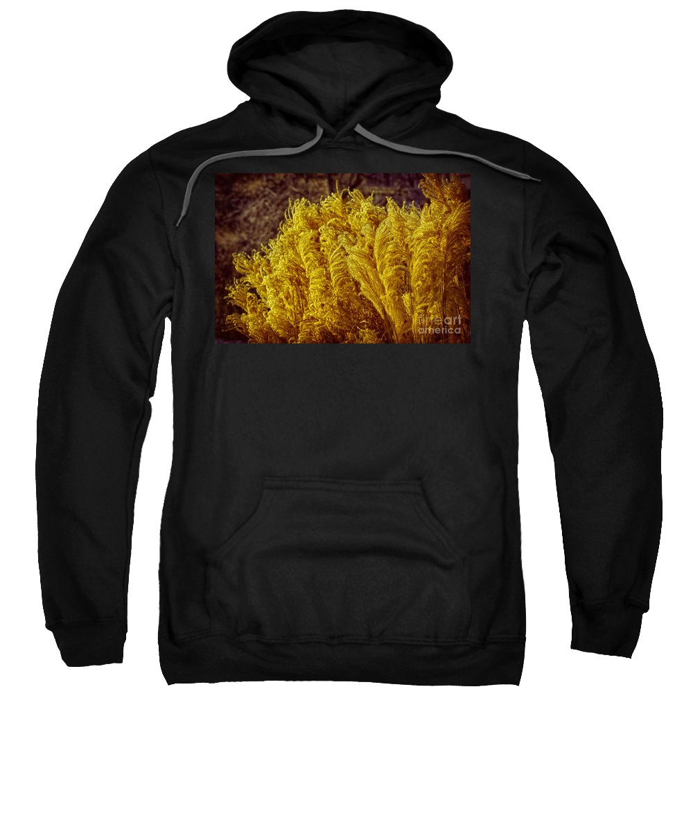 Tree Sweatshirt featuring the photograph Naturally Blonde by Joe Geraci